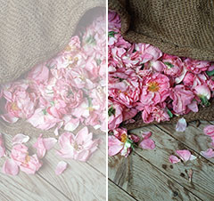 Harvest roses in a willow sack